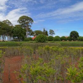 Dole Pineapple Plantation | Oahu Hawaii