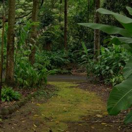 Waimea Valley | Oahu Hawaii