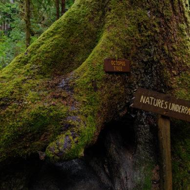 Trees of Mystery   Klamath, CA